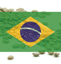 "Káva Brazilia Santos NY2 17/18 ""Barbosa Gold"" - 100% arabika"